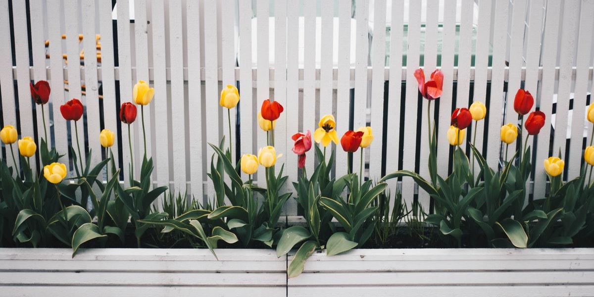 low maintenance garden ideas